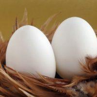 Что было раньше — курица или яйцо ?