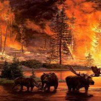 Что горело на Огненной Земле ?