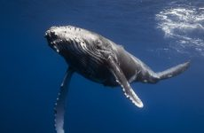Что получают из китов ?