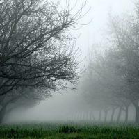 Деревья не представляют опасности