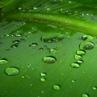 Дождевые капли имеют форму слезы