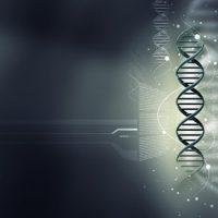 Гены находятся в половых клетках