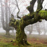 Как в лесу определить север ?