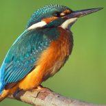 Какие птицы вдохновили Дарвина на создание теории эволюции?