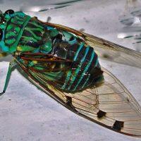 Какое насекомое живет дольше всех ?