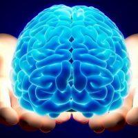 Какого цвета мозг?