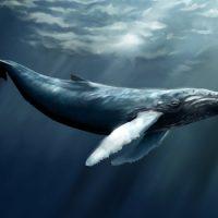 Интересные факты про Кита (Whale)