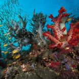 Интересные факты про Коралл (Coral)