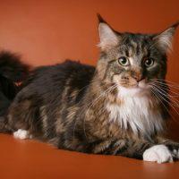 Интересные факты про Кошку (Cat)