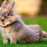 Интересные факты про Кролика (Rabbit)