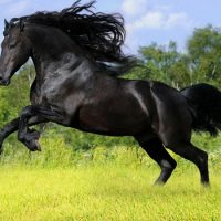 Лошадь не пятится назад