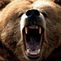 Интересные факты про Медведя (Bear)