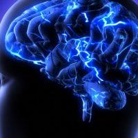 Мозг умного человека тяжелее, чем мозг дурака