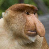 Интересные факты про Обезьян (Monkey)