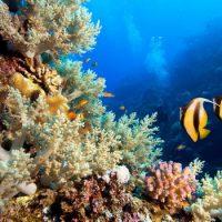 Образование коралловых рифов
