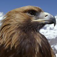 Интересные факты про Орла (Eagle)