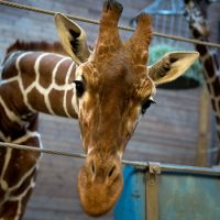 Первый зоопарк