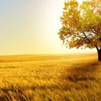Почему солнечный свет полезен для здоровья ?