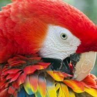 Попугаи не понимают, что говорят
