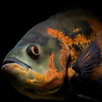 Рыбы глухи и немы