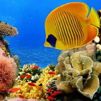 Рыбы — глупые животные