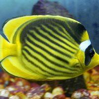 Рыбы могут пережить заморозку