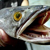 Рыбы не охотятся на суше