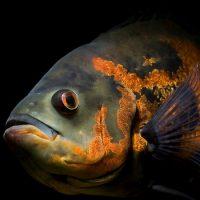 Рыбы — немые