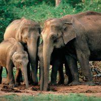 Слоны боятся мышей ?