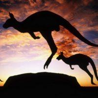 Сумчатые — переходный этап эволюции