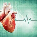 У какого млекопитающего больше всего серцебиений в течение жизни ?