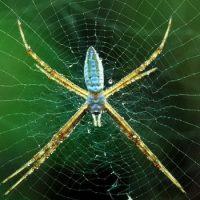 Укусы пауков опасны