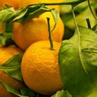 Витамин С излечивает от простуды