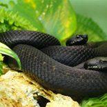 Все ли змеи появляются из яиц ?
