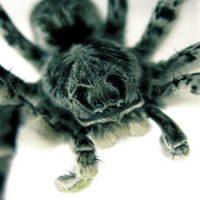 Все пауки плетут паутину