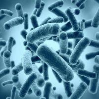 За что все ополчились на бактерий ?