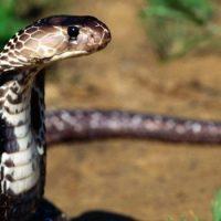 Змеи не опасны на расстоянии