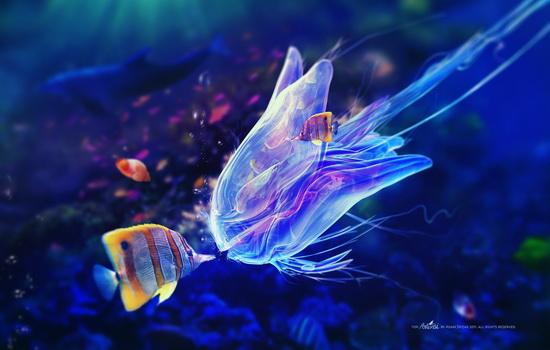 Что делать, если вас ужалит медуза ?