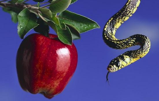 Что сорвали с древа познания Адам и Ева ?