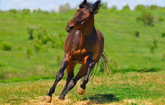 Двигатель мощностью в 100 лошадиных сил могут заменить 100 лошадей