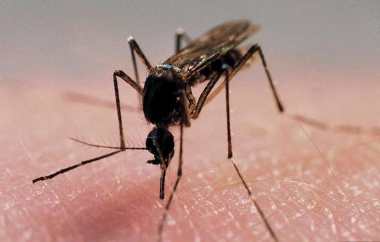 Какое животное или насекомое из когда-либо обитавших  на нашей планете является наиболее опасным?