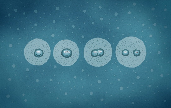 Клетки организма человека