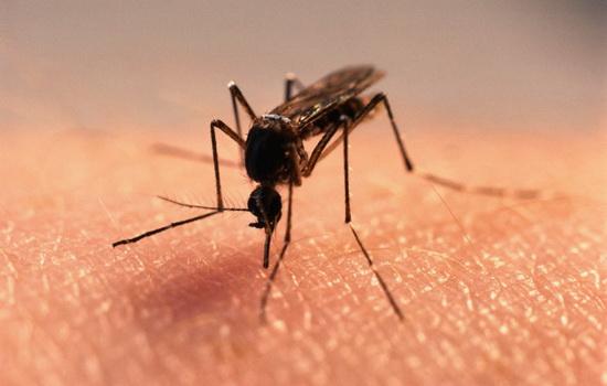 Комары находят человека по тепловому излучению