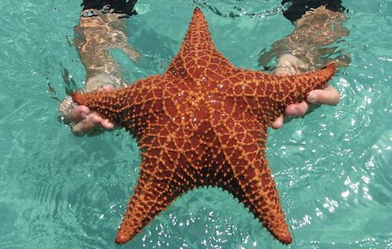 Интересные факты про Морскую звезду (Starfish)