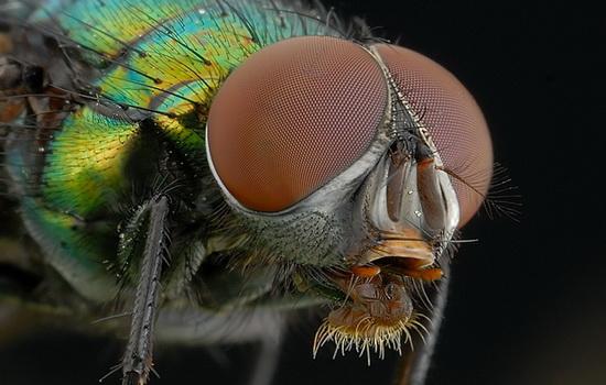 Интересные факты про Мух (Fly)