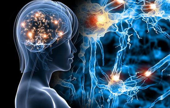 На сколько процентов работает мозг?