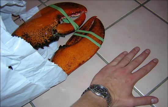 Интересные факты про Омара (Lobster)