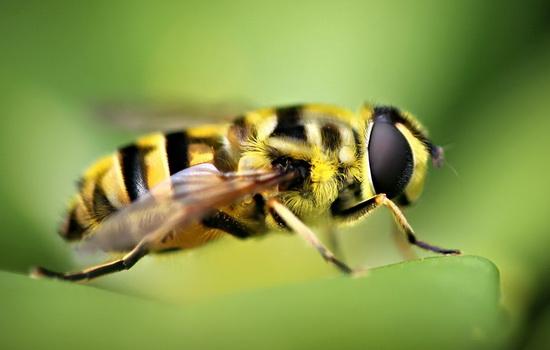 Интересные факты про Осу (Wasp)