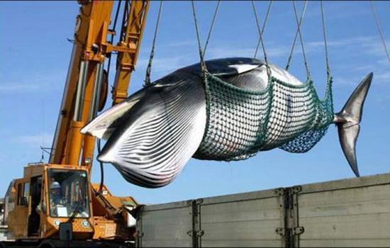 Особенности охоты на китов