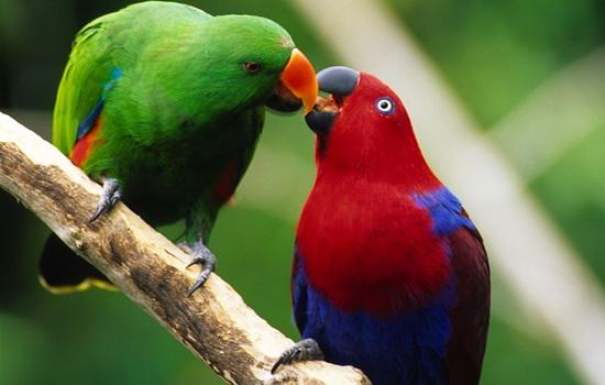 Интересные факты про Попугая (Parrot)